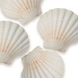 Shells II Art by Jan Lens