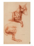 Study of a Pomeranian Dog, Drawing, Royal Library, Windsor Premium Giclee Print by  Leonardo da Vinci