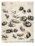 Cats, Lions and Dragons, Drawing, Royal Library, Windsor Giclée-Druck von  Leonardo da Vinci