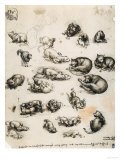 Cats, Lions and Dragons, Drawing, Royal Library, Windsor Premium Giclee Print by  Leonardo da Vinci