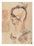 Head Section with the Anatomy of the Eye, Drawing, Royal Library, Windsor Premium Giclee Print by  Leonardo da Vinci