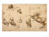 Rearing Horse and Study of Horse, Lion and Human Heads, Drawing, Royal Library, Windsor Premium Giclee Print by  Leonardo da Vinci