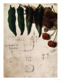 Cherries and Peas, Institut De France, Paris Giclee Print by Leonardo da Vinci 