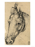 Study of the Head of a Horse, Pen Drawing on Paper Turned Yellow, Royal Library, Windsor Premium Giclee Print by  Leonardo da Vinci