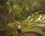 Riziere-Bali Prints by  Diagentur