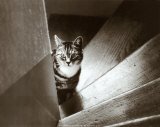 Cat in the Stairs Posters by Marie Babey