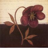 Literary Floral II Art by  Regina-Andrew Design