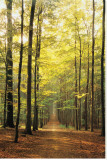 Forest Path Stretched Canvas Print