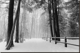Winter Country Lane, Michigan Reproduction transférée sur toile