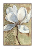 Magnolia Majesty I Premium Giclee Print by Jennifer Goldberger