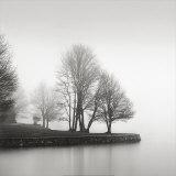 Fog and Trees at Dusk Poster von  Lsh