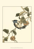 Oriental Bird on Branch III Prints