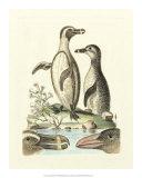 Aquatic Birds IV Giclee Print by George Edwards