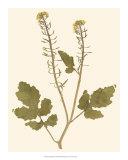 Pressed Botanical I Giclee Print