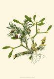 Mistletoe Branch Print
