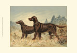 Irish Setter II Print by Alexander Pope