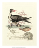 Aquatic Birds I Posters par George Edwards