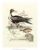 Aquatic Birds I Giclee Print by George Edwards