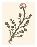 Pressed Botanical II Giclee Print
