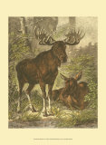 Small Moose Prints by Friedrich Specht