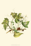 Clematis Branch Prints