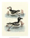 Aquatic Birds II Giclee Print by George Edwards