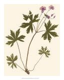 Pressed Botanical III Giclee Print