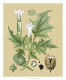 Ivory Blooms II Giclee Print