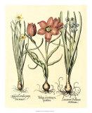 Bulb Garden IV Giclee Print by Besler Basilius
