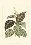 Tropical Variegation II Prints