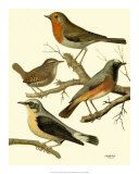 Domestic Bird Family III Giclee Print by W. Rutledge