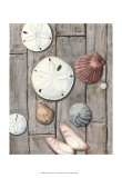 Seashore Treasure I Poster by Megan Meagher