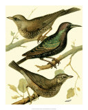 Domestic Bird Family IV Giclee Print by W. Rutledge