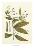 Nature's Elegance I Giclee Print by J.j. Plenck