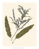 Pressed Botanical IV Giclee Print