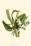 Balmy Reed Branch Prints