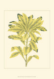 Tropical Variegation IV Prints