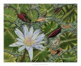 Enchanting Lily Giclee Print by Gloria J. Callahan