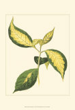 Tropical Variegation VI Prints