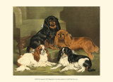 Toy Spaniels Lmina por Vero Shaw