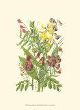 Summer Garden IX Print by Anne Pratt