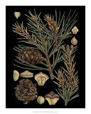Dramatic Conifers II Posters