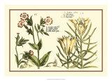 Garden Botanica III Giclee Print