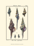 Sea Shells I Poster by Denis Diderot