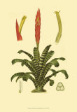 Tropical Tillandsia Poster