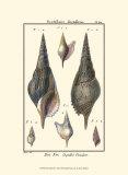 Coquillages III Affiche par Denis Diderot