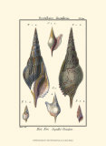 Sea Shells III Planscher av Denis Diderot
