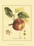 Petite Tuscan Fruits I Poster
