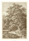 Sepia Oak Tree Wydruk giclee autor Ernst Heyn