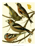 Domestic Bird Family II Giclee Print by W. Rutledge